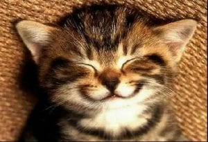 Your cat might have the keys to happiness...but you already knew that!