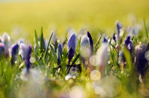 Taking Cues from Spring to Update Your Online Presence- Spring Flowers by George Hodan