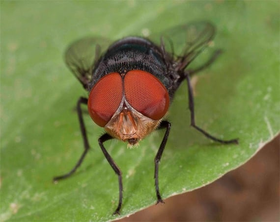 insect photo tips2 - ???????????????????????????????????????