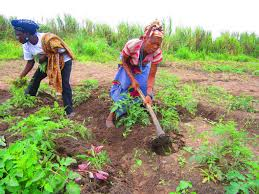 Gender Equality and Food Security: Women's Empowerment as a Tool against Hunger