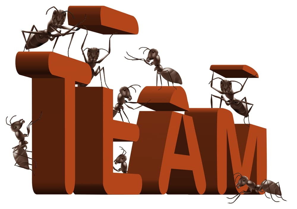 What Fire Ants and Meerkats Can Teach Us about Building a Strong