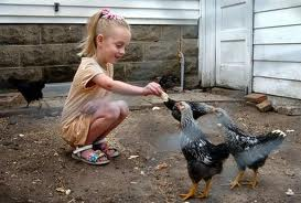 images3 - Children-playing-with-chickens-9000
